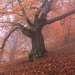 Фототур «Золото Демерджи» 14-18/10/2015г. http://phototours.com.ua/tours/zoloto-demerdzhi