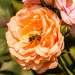 Роза и хитрая пчела
