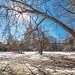 Солнечные ветви, тающий снег...