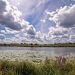 Болотистые берега Клязьмы