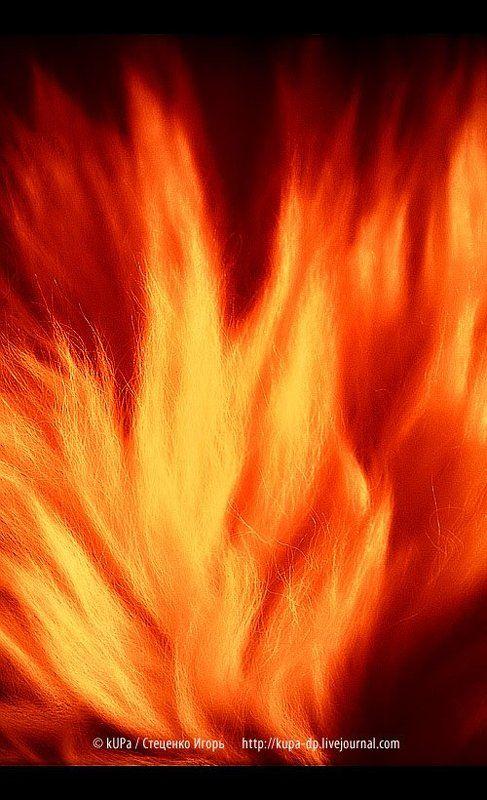 шкура, огонь Огненная шкура \\ Fiery skinphoto preview
