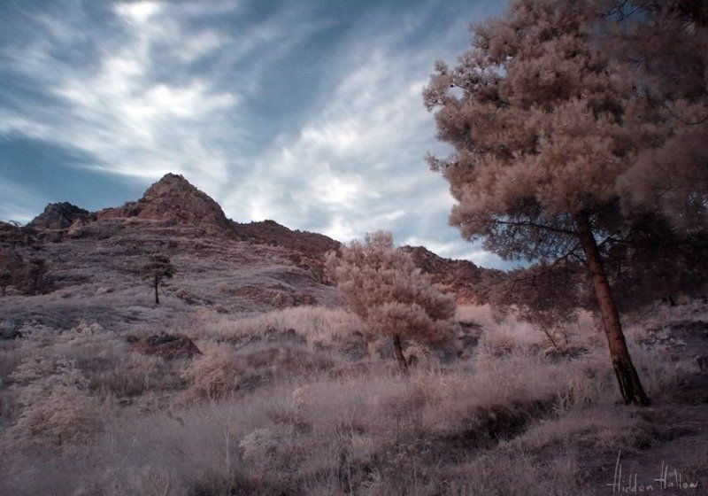 инфра-красное фото, крым, лес, природа, небо Skies of Venusphoto preview