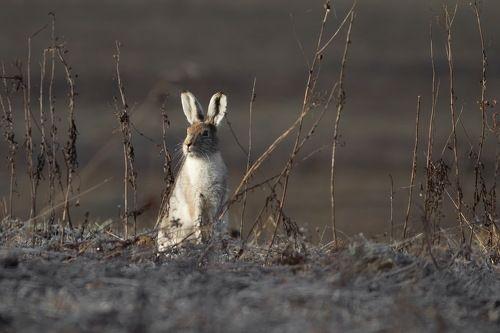 про зайца,греющегося на весеннем солнышке и осеннюю траву,которой все-равно.