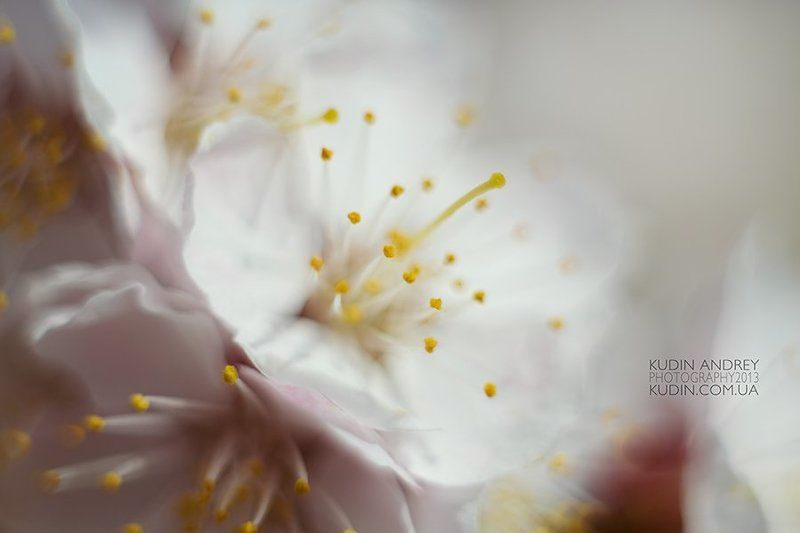 макро, цветение , фото кудин андрей Весна.photo preview