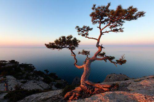 японский мотив в Крыму