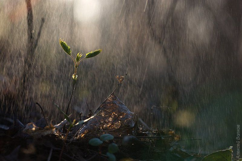 дождь, кусковский парк, май, весна Майский ливеньphoto preview