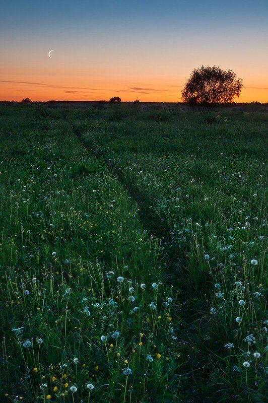 Восход, Закат, Лето, Луг, Одуванчики, Пейзаж Царство комаринноеphoto preview