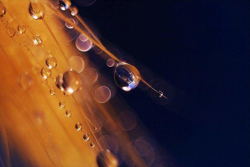В полётphoto preview