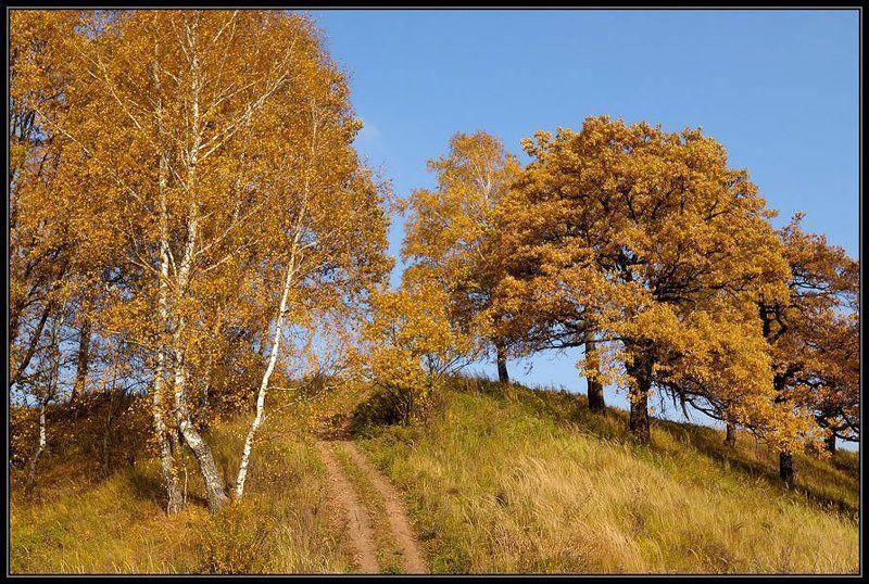 осень, холм ***photo preview