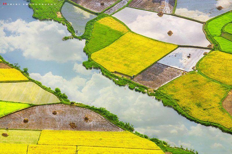 rice harvestphoto preview