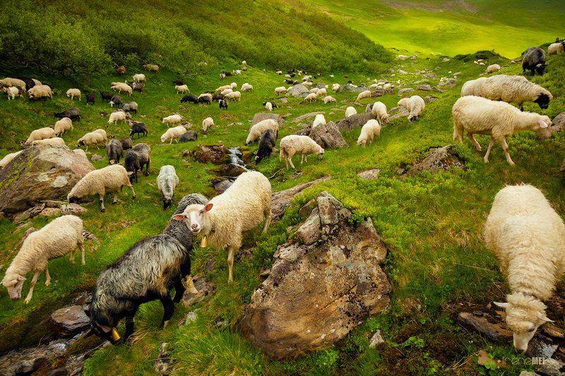 Путь пастуховphoto preview