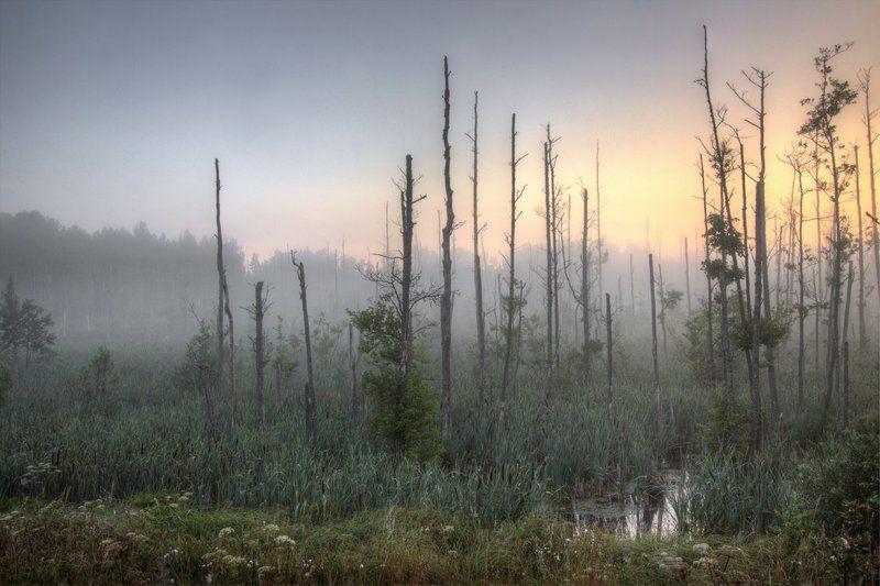 Утро на болоте...photo preview