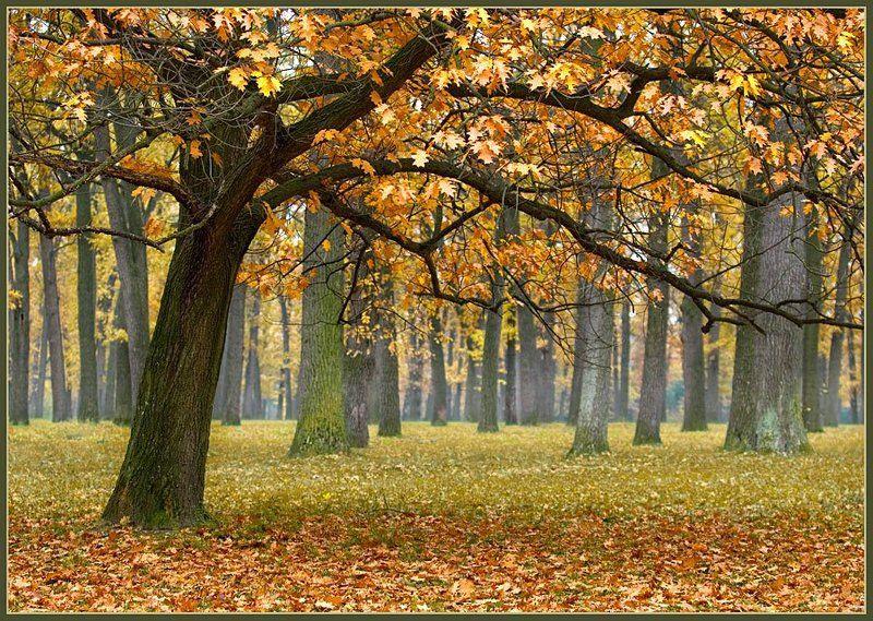 пейзаж, осень, дуб, дубовая роща, золотая, lad_i_mir Осень в дубовой рощеphoto preview