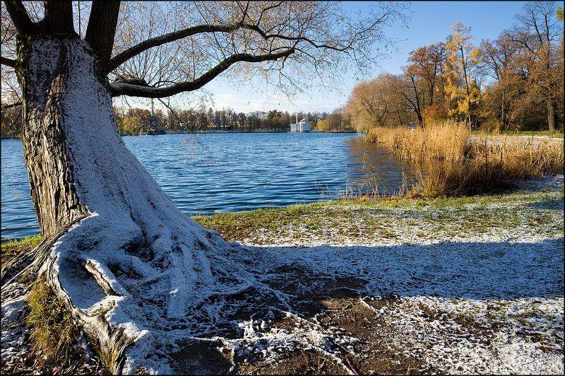 У большого пруда.photo preview