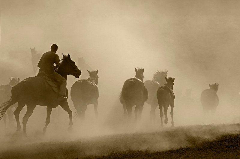 кони,лошади,табун,пыль табунщикphoto preview