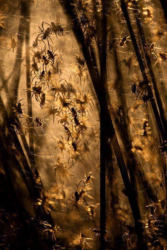 из серии про паучьи яслиphoto preview