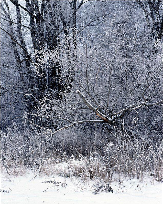 деревья, изморозь, ноябрь, Зима уже близко.photo preview