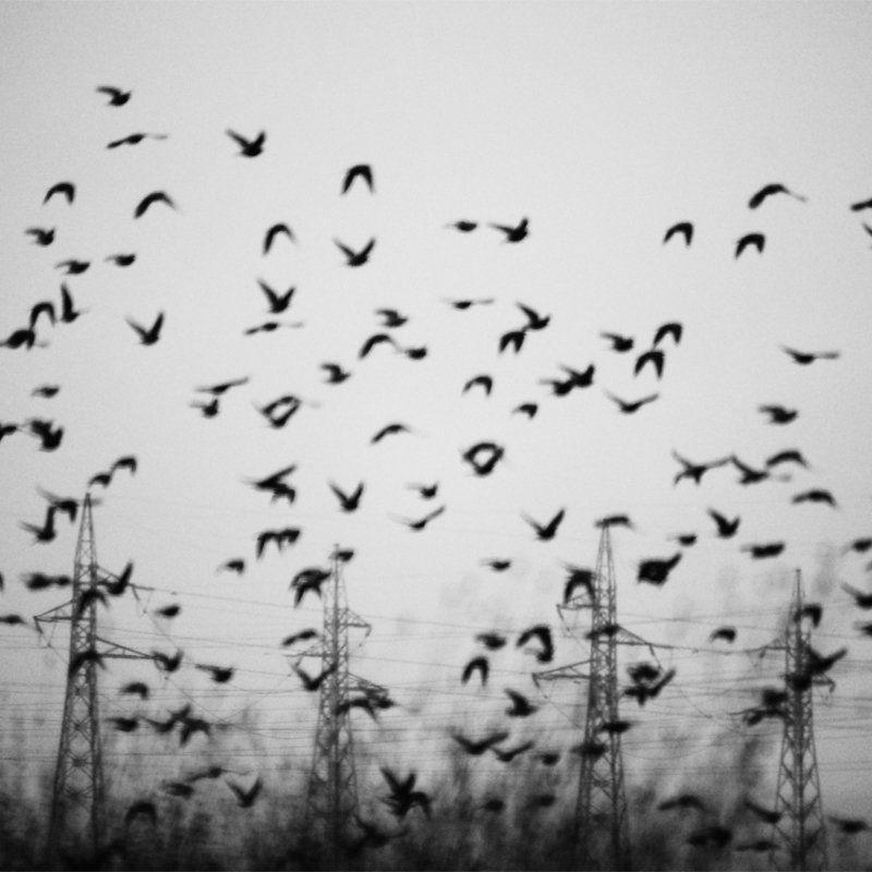 Поезия с птициphoto preview