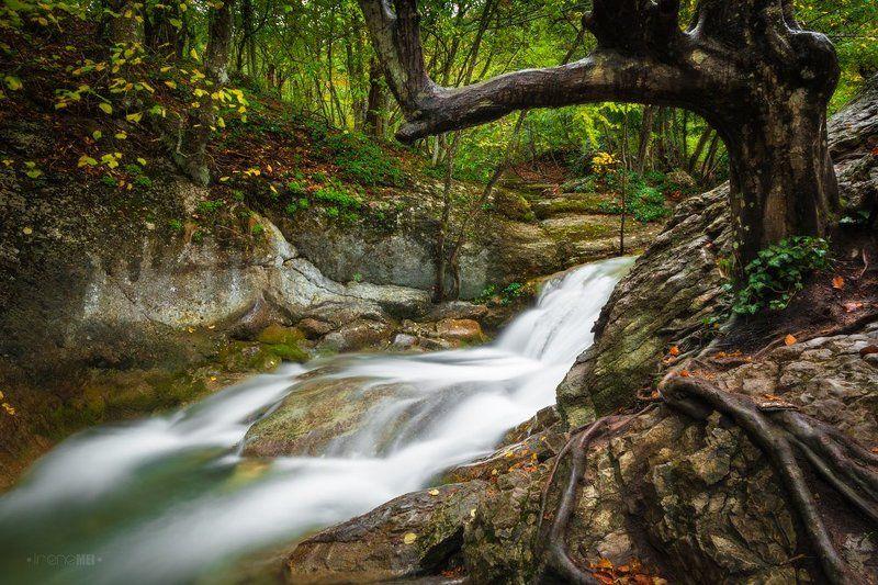 лес, пейзаж, landscape, nature, forest, tree, green, moss, water, river Таинственный Лесphoto preview