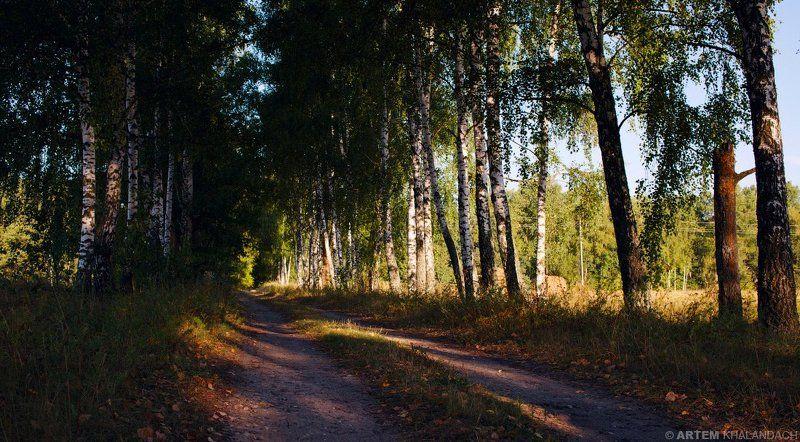 Беларусь, Полесье Березовая дорожкаphoto preview