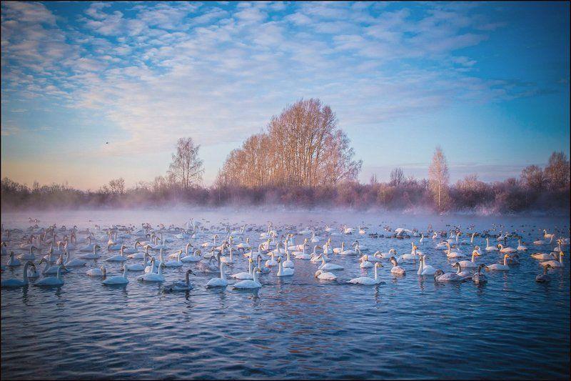 алтай, лебеди, зима Рассвет на Лебедином...photo preview