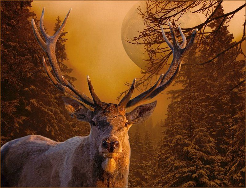 комп-арт, зтиа, лес, луна, ночь, олень, зимняя сказка, lad_i_mir Зимняя сказкаphoto preview
