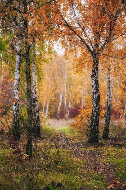 Осенней тропинкойphoto preview