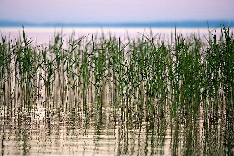 природа, nature, landscape, evening, sunset Вечер самого длинного дня в годуphoto preview