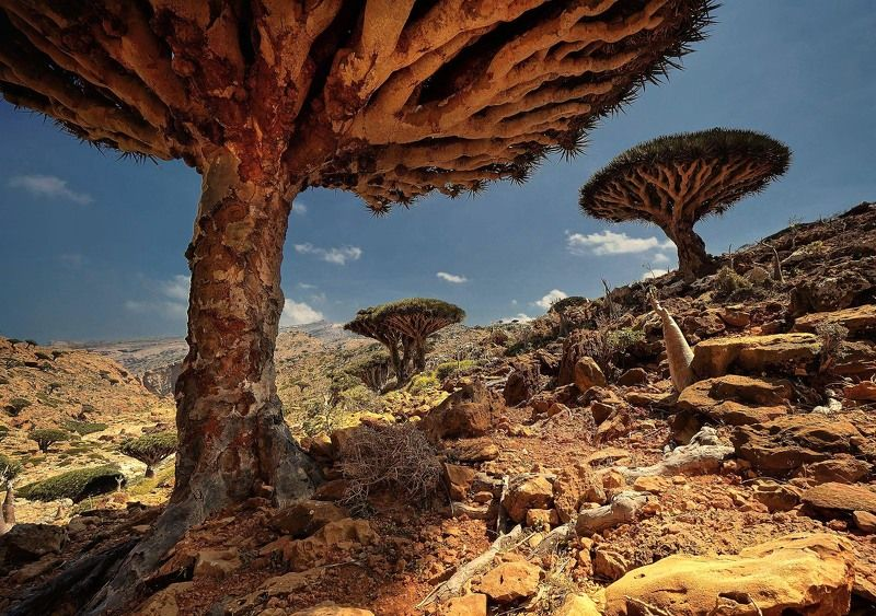 Socotra Islandphoto preview