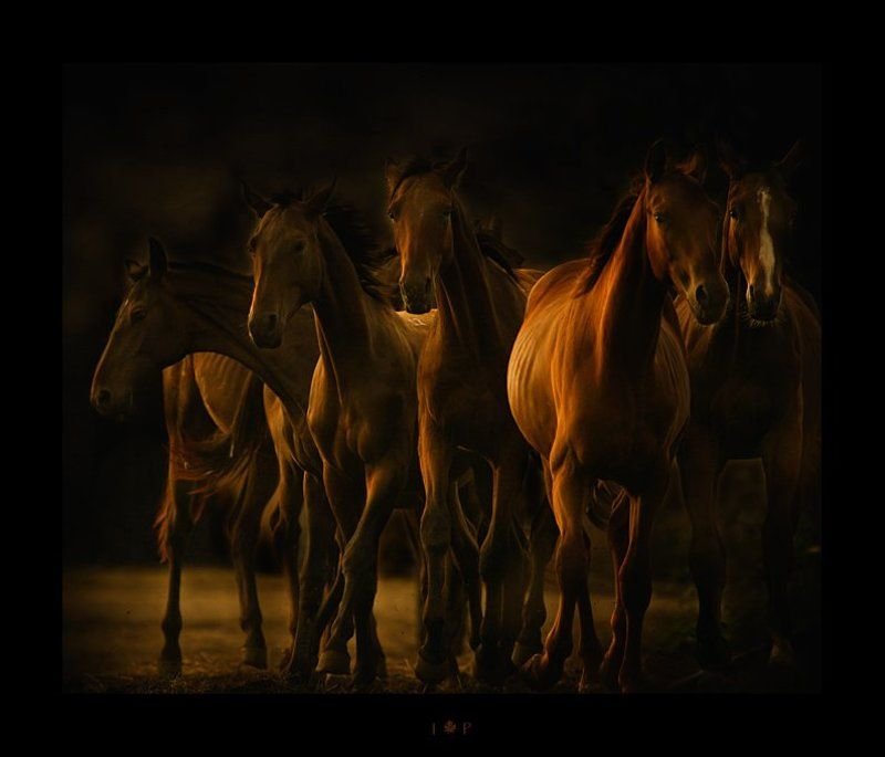 про лошадок...photo preview