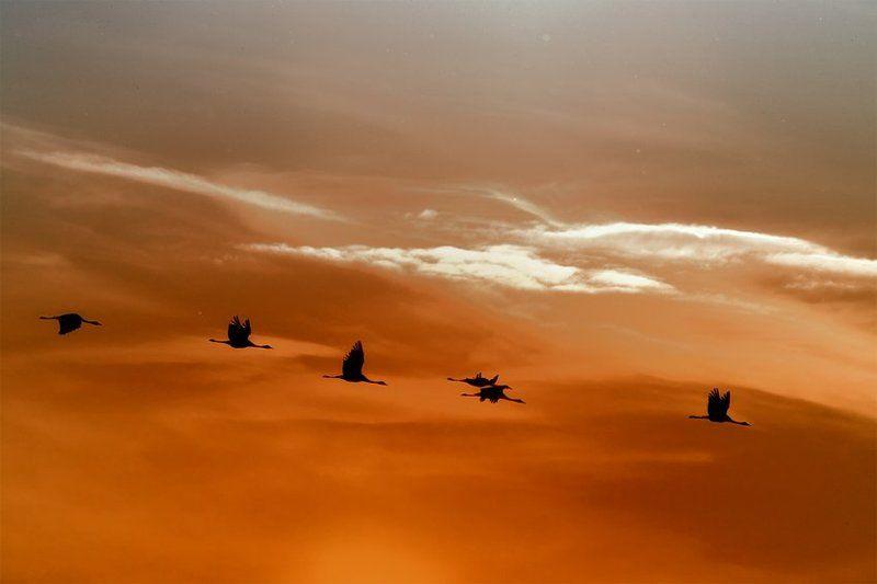 журавли на закате...photo preview