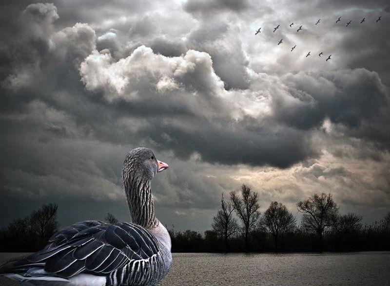 комп-арт, река, серая шейка, lad_i_mir Серая Шейкаphoto preview