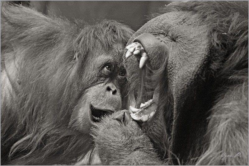 про стоматолога...photo preview