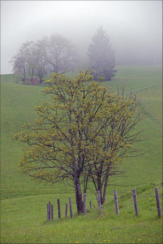 Мимолетно-туманное...photo preview