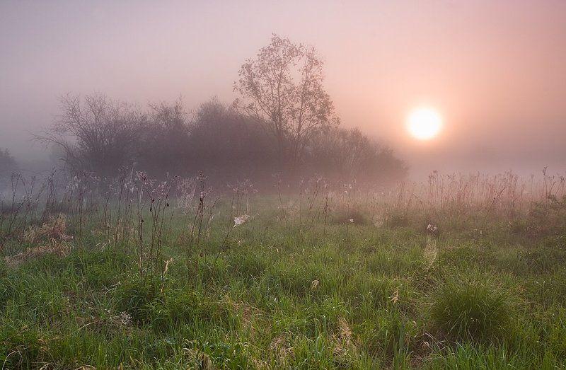 Кусты, Паутина, Солнце, Трава, Туман, Утро ***photo preview