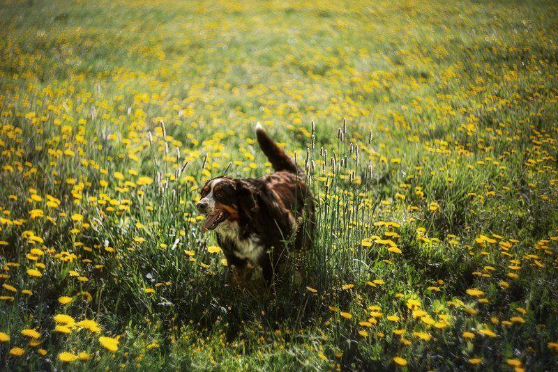 собачья радостьphoto preview