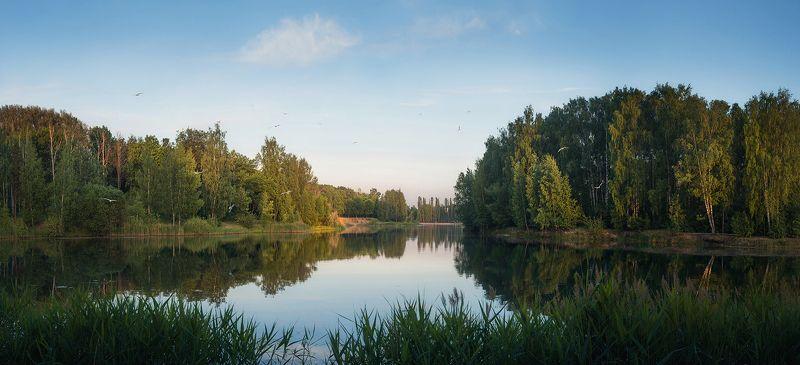 вечер, озеро, чайки с чайками)photo preview