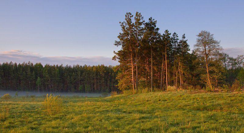 2011, Весна, Лес, Пейзаж, Поле, Сосны, Трава, Туман, Украина ***photo preview