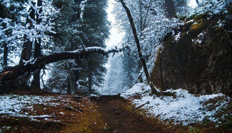 Алтай, Горный алтай, Дебри, Дикая природа, Зима, Иней, Лес, Снег photo preview