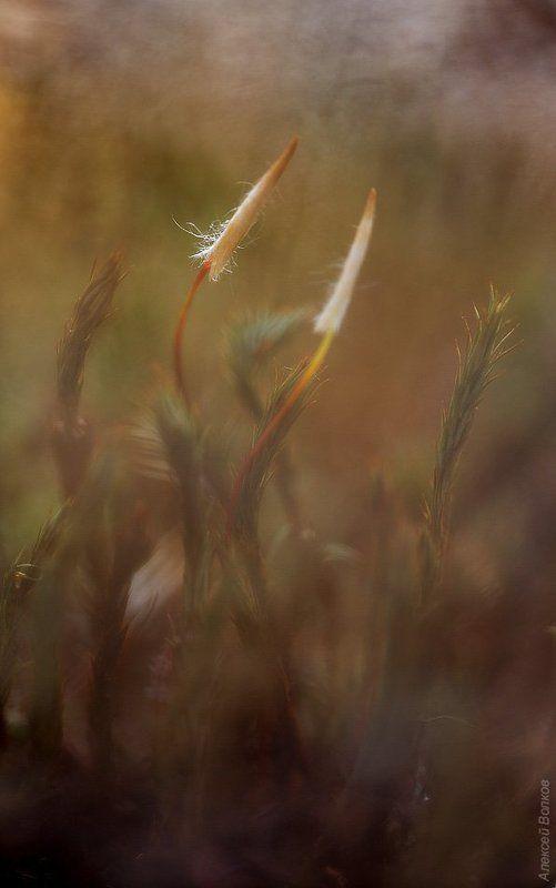 Весенний мохphoto preview