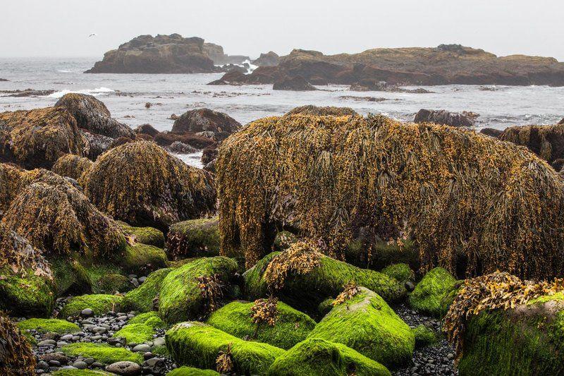 Дождливым днем на берегу Атлантического океанаphoto preview