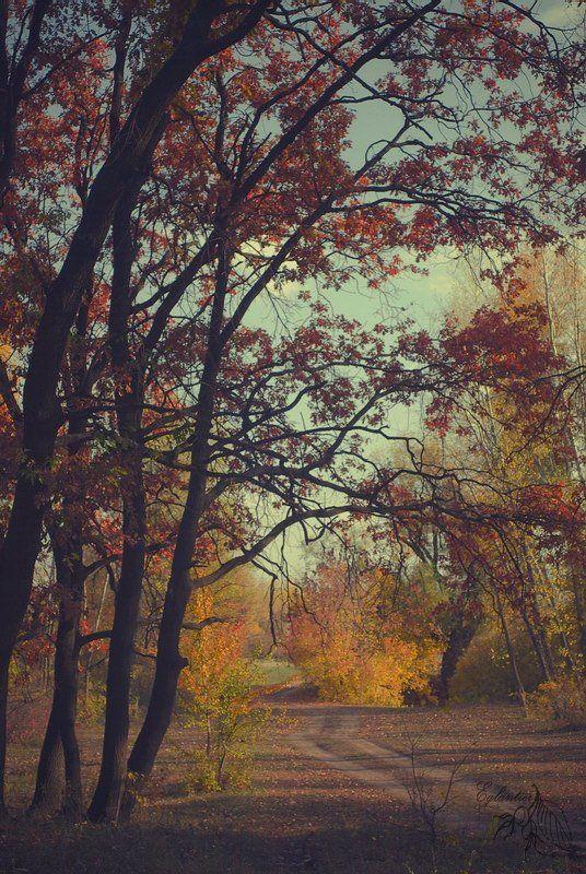 лес, дорога, дерево, желтый, красный, осень, пейзаж, россия Лесная дорога.photo preview