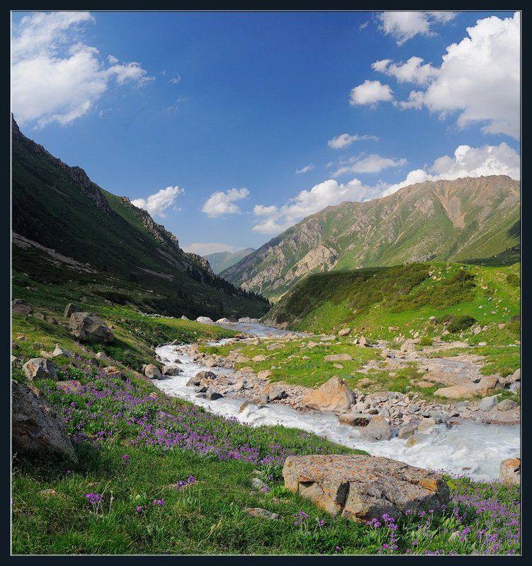 горы,природа,река,скалы,цветы,облака,ущелье,лес,трава Примулыphoto preview