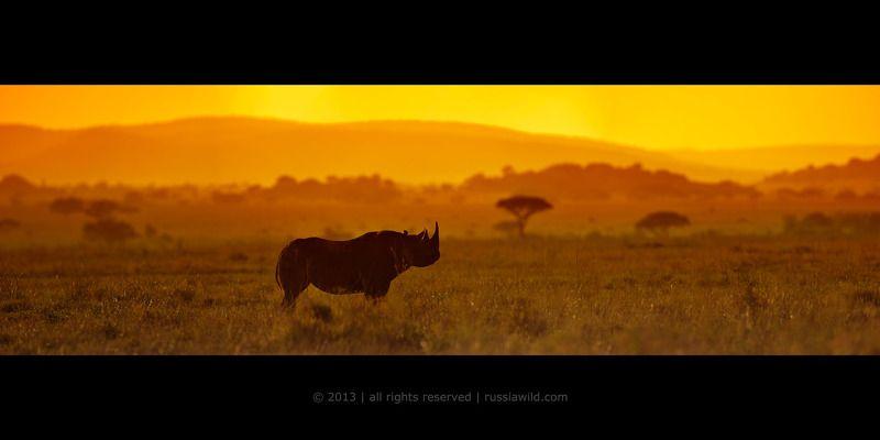 Африканские воспоминанияphoto preview