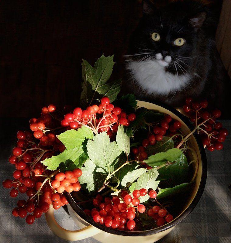 Про дачный юмор, кота и калину...photo preview