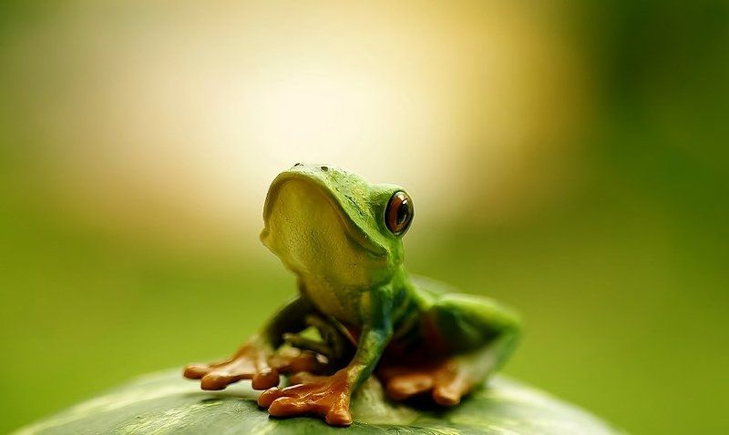 frogphoto preview
