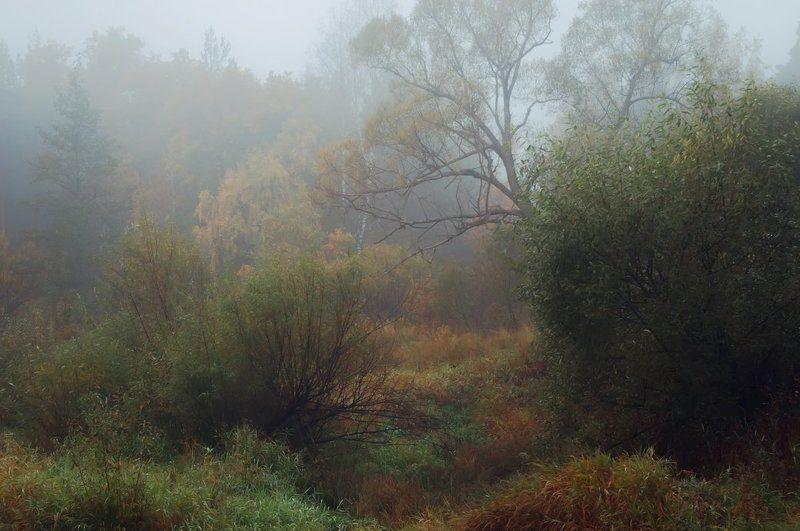 Осень. Снова и снова. Всё ближе и ближе. Зима.photo preview