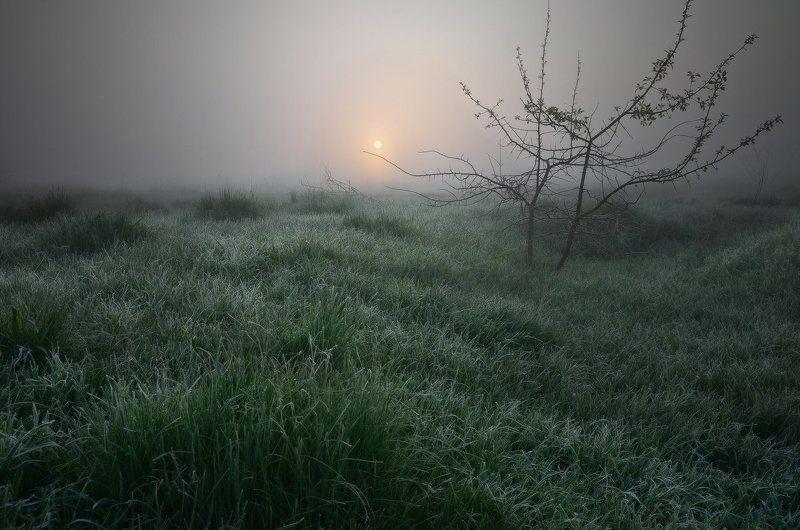 Туман, иней и тишинаphoto preview