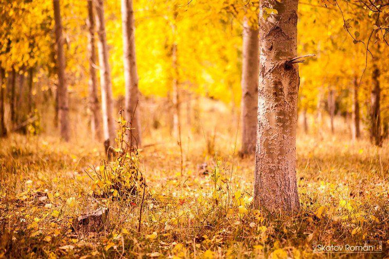 Береза, Каракольское ущелье, Кыргызстан, Лес, Листья, Осень Осень в горах.photo preview