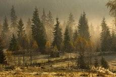 Осенний стелется туман...